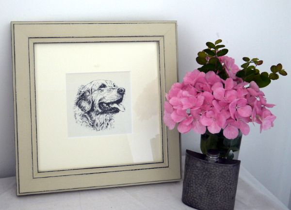 Retriever - head - Ret O1 - 1960's print by Bridget Olerenshaw